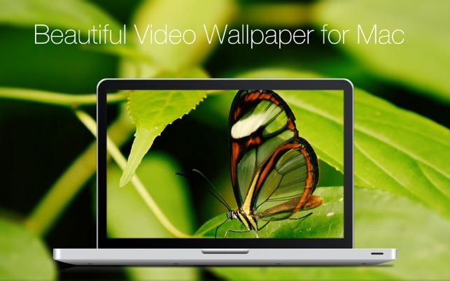 ‎Live VideoWall Screenshot