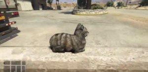 [Friday Fun] GTA V – Erschrecke niemals eine Katze bei GTA V