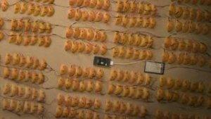 [Friday Fun] #FYI: Wie viele Orangen braucht man, um ein iPhone zu laden?